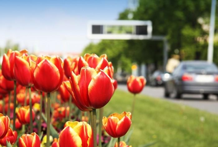 Ce trebuie să faci pentru a pregăti mașina de primăvară?